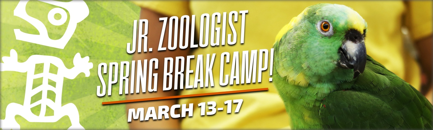 Jr. Zoologist Spring Break Camps